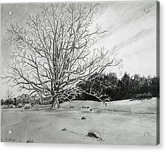 Big Tree Acrylic Print by Christine Lathrop