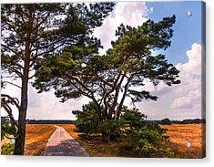 Bike Track In Hoge Veluwe National Park. Netherlands Acrylic Print by Jenny Rainbow