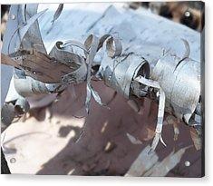 Birch Bark Acrylic Print by Gene Cyr