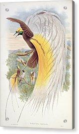 Bird Of Paradise Acrylic Print by John Gould