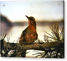Bird On The Wire Acrylic Print