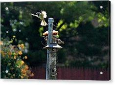 Birds03 Acrylic Print