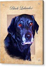 Black Labrador Art Acrylic Print by Iain McDonald