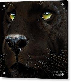 Black Leopard Acrylic Print by Jurek Zamoyski