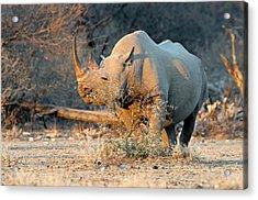 Black Rhinoceros Acrylic Print by Tony Camacho