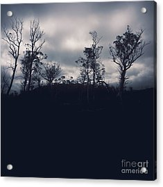 Black Silhouette Trees In Spooky Tasmanian Forest Acrylic Print by Jorgo Photography - Wall Art Gallery