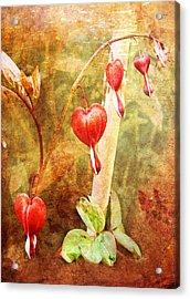 Acrylic Print featuring the digital art Bleeding Heart by Helene U Taylor