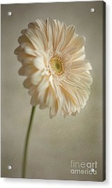 Acrylic Print featuring the photograph Blooming by Aiolos Greek Collections
