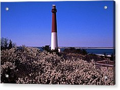 Blooming Barnegat Acrylic Print by Skip Willits