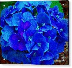 Blue Beauty Acrylic Print by Annette Allman