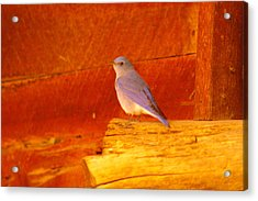Blue Bird Acrylic Print by Jeff Swan