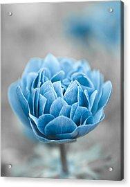 Blue Flower Acrylic Print by Frank Tschakert