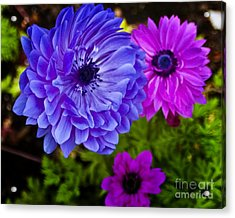 Blue Flower Acrylic Print by Michael Fisher