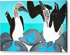 Blue Footed Boobies. Acrylic Print