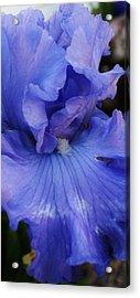 Blue Magic Acrylic Print by Bruce Bley