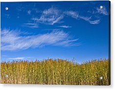 Blue Sky Acrylic Print by Jason KS Leung