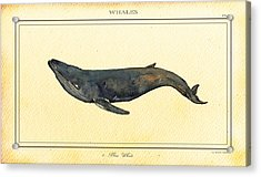 Blue Whale Acrylic Print by Juan  Bosco