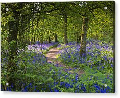 Bluebell Woods Walk Acrylic Print