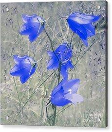 Bluebells Acrylic Print by Sylvia  Niklasson