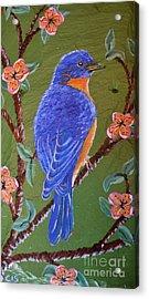 Bluebird Acrylic Print by Cecilia Stevens