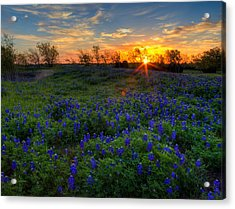 Bluebonnets Acrylic Print by Mark Alder