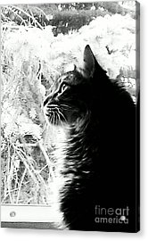 Acrylic Print featuring the photograph Bo by Jacqueline McReynolds
