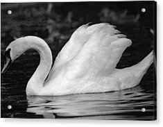 Boston Public Garden Swan Acrylic Print
