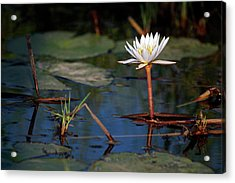 Botswana, Okavango Delta Acrylic Print by Kymri Wilt