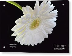 Acrylic Print featuring the photograph Bright White Gerber Daisy # 2 by Jeannie Rhode
