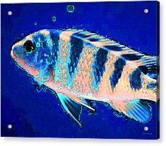 Bubbles Fish Art By Sharon Cummings Acrylic Print by William Patrick