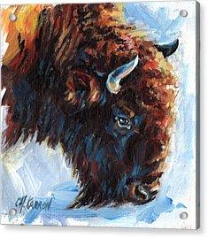 Buffalo Acrylic Print by Christine Karron