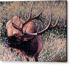 Acrylic Print featuring the painting Bugle Boy by Craig T Burgwardt