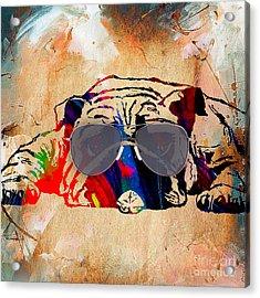 Bulldog Collection Acrylic Print