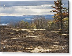 Burnt Blueberry Field In Maine Acrylic Print