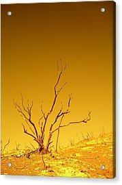 Burnt Bush Acrylic Print