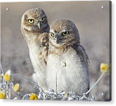 Siblings Acrylic Print