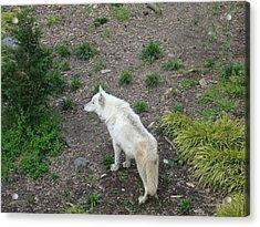 Busch Gardens - 01136 Acrylic Print by DC Photographer