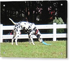 Busch Gardens - 12122 Acrylic Print by DC Photographer