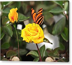 Busy Butterfly Acrylic Print