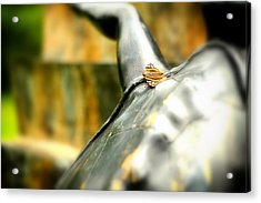 Acrylic Print featuring the photograph Butterfly by Boris Mordukhayev