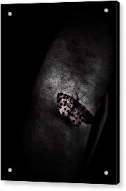 Butterfly Caught Acrylic Print by Dalibor Davidovic