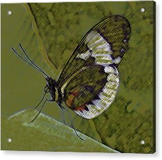 Butterfly Green Acrylic Print