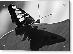 Butterfly II Acrylic Print by Ron White