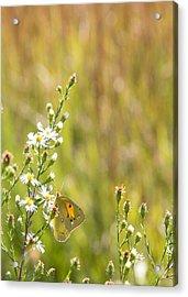 Butterfly In A Field Of Flowers Acrylic Print