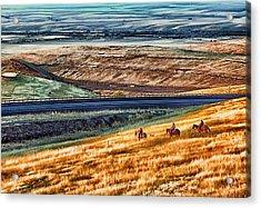 Cabbage Hill Pendleton Oregon Acrylic Print