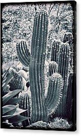 Cactus Land Acrylic Print by Kelley King
