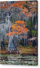 Caddo Lake Autumn Acrylic Print