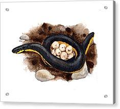 Caecilian Acrylic Print