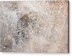 Camouflaged Leopard Acrylic Print by Christa Niederer