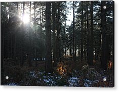 Acrylic Print featuring the photograph Cannock Chase by Jean Walker